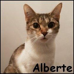 Alberte