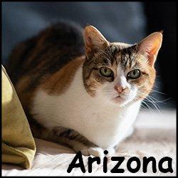 Arizona3