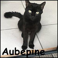 Aubepine