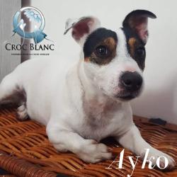 Ayko1