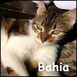 chat bourg en bresse