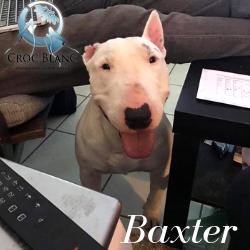 Baxter 2