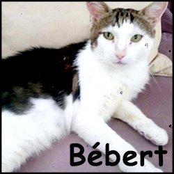 Bebert