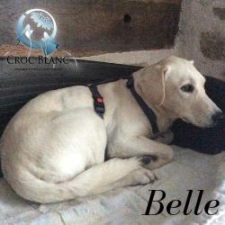 Belle 2