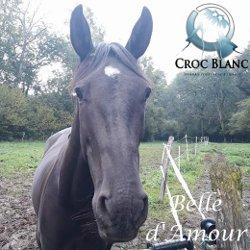 Adoption Chevaux Croc Blanc