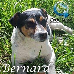 Bernard 2