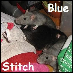 blue et stitch