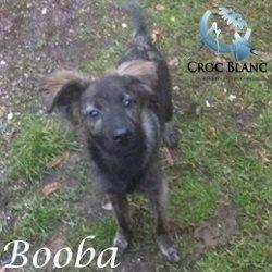Booba
