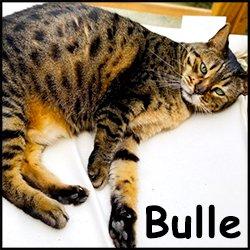 Bulle 2