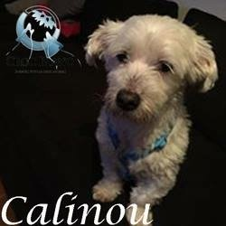 Calinou