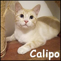 Calipo 2