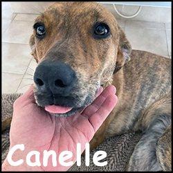 Canelle1