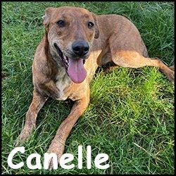 Canelle2