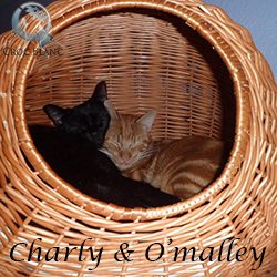 Charly & O'Malley1