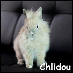 Chlidou
