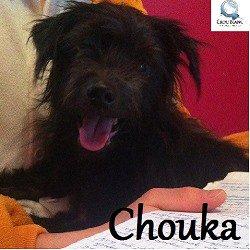 chouka