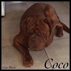 coco!