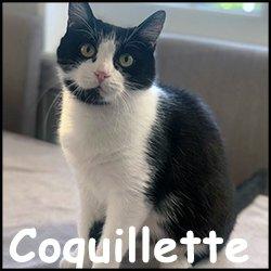Coquillette