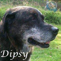 Dipsy