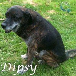 Dipsy 2