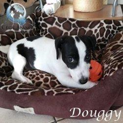 Douggy