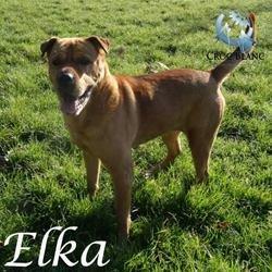 Elka 2