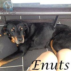 Enuts1