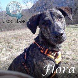 Flora 2