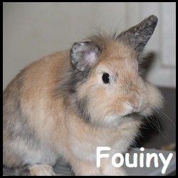 fouiny