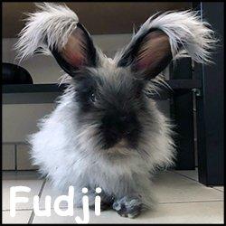 Fudji