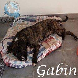 Gabin