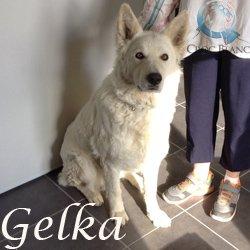 Gelka2