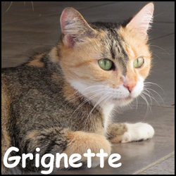 Grignette
