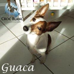 Guaca