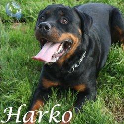 Harko