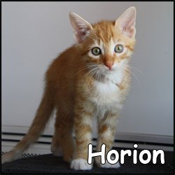 Horion
