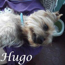 Hugo york
