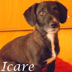 Icare - Alsace