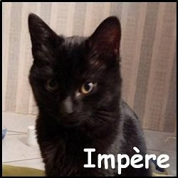 Impere