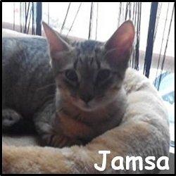 Jamsa