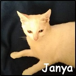 Janya