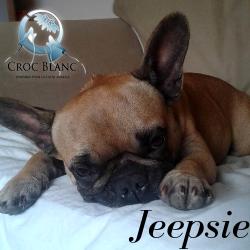 Jeepsie