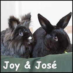 Joy josé