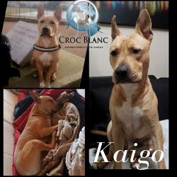 Kaigo