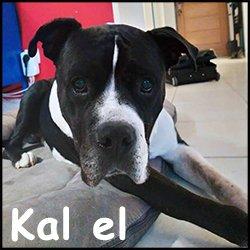 Kal el1