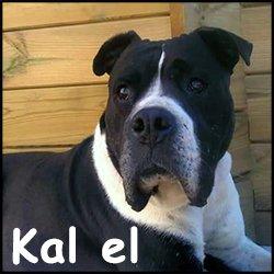 Kal el2
