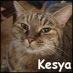 Kesya