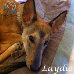 Laydie2