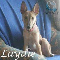 Laydie
