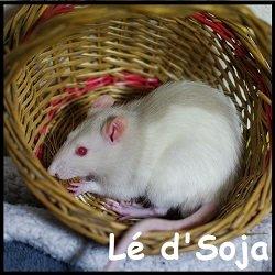 Lé d'Soja